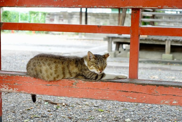 Today's Cat@2019-08-14