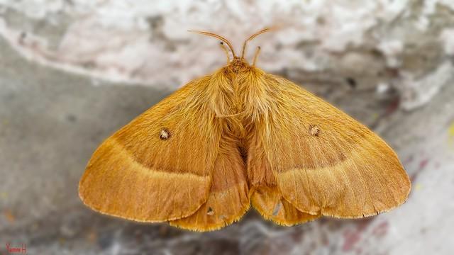 Butterfly - 7239