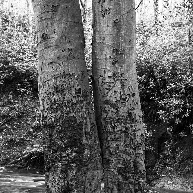 Stanley Burn Woods, Mamiya C220 with 80mm Lens, Delta 100 in FX39