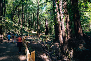 Redwood Regional Trail Walk | by Graham Gibson