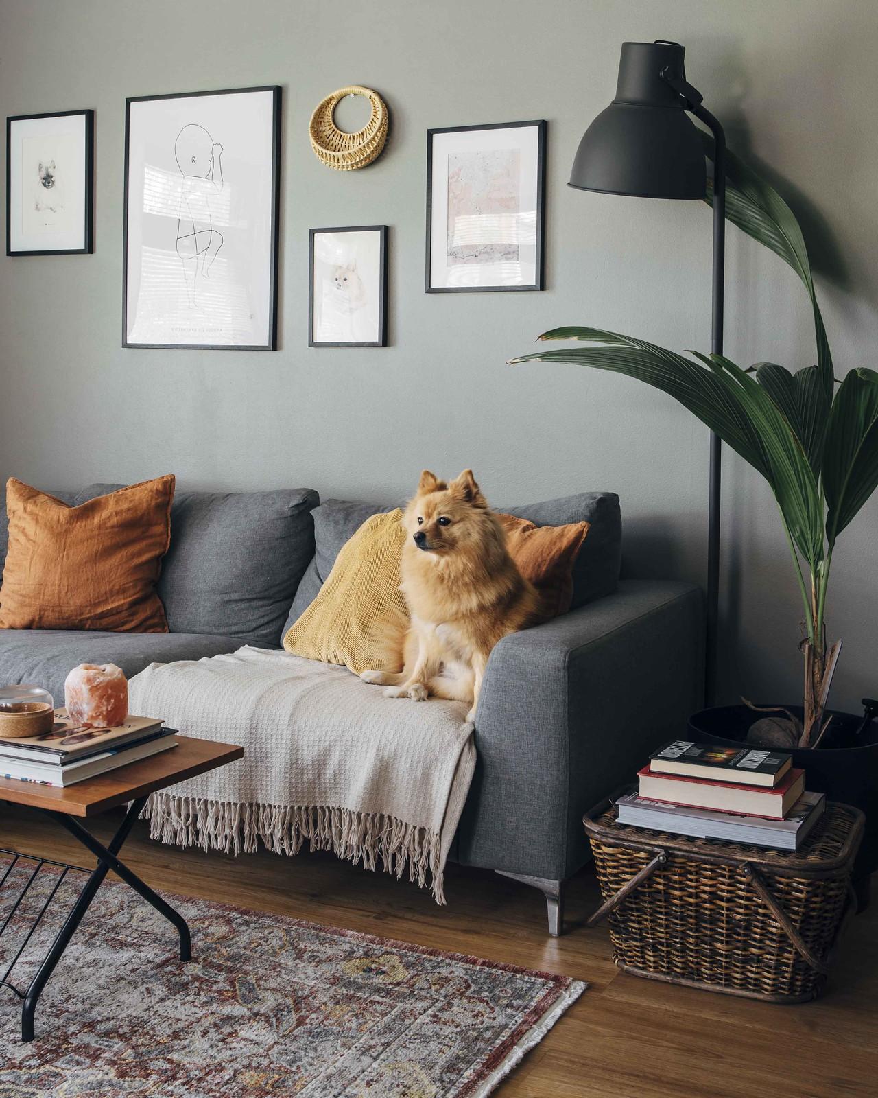 Tunnelmallinen olohuone, jossa harmaa seinä ja harmaa sohva. Sohvalla istuu oranssi koira.