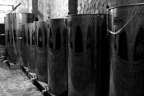 georgia maranivellino vineyard wine vat
