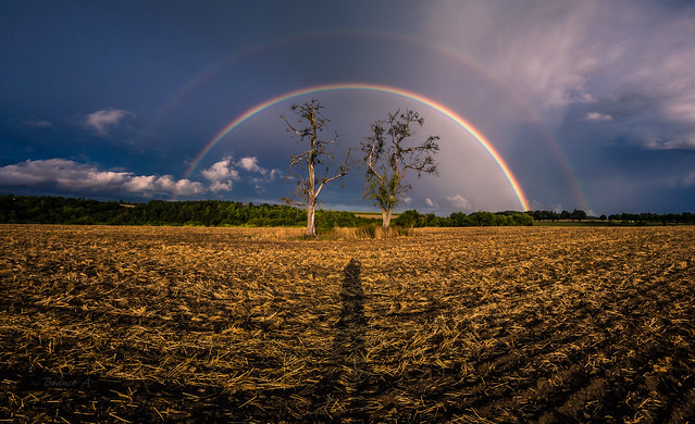 My trees, a rainbow and me