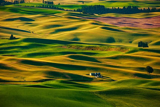 Eastern Washington Farmland