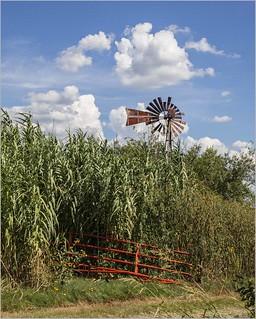 Windmill Wednesday