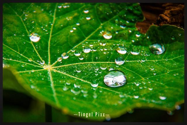 ... Rain - Drops ...