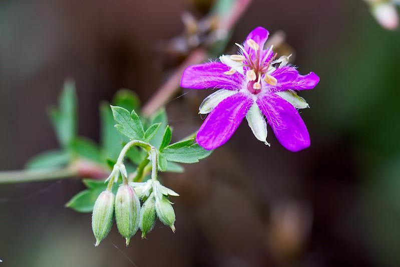 Wild-Flower-31-7D1-080819