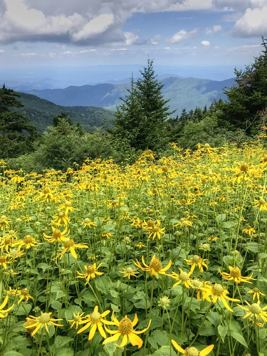 landscape mtmitchellstatepark vertical nature wildflowers trees mountains sky clouds