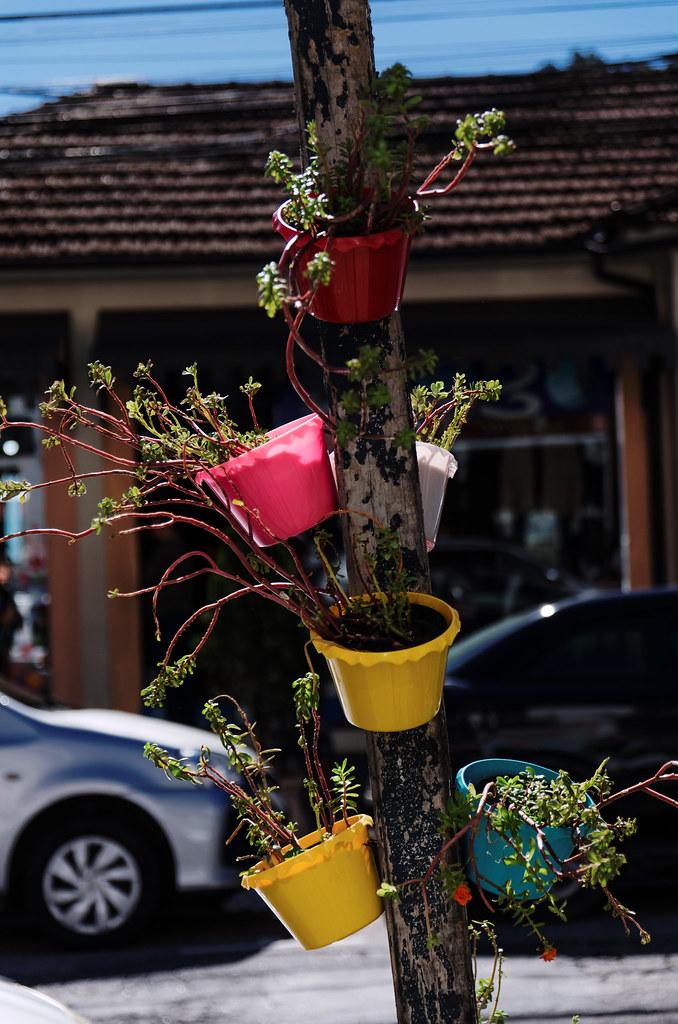 Florzinhas em vasinhos
