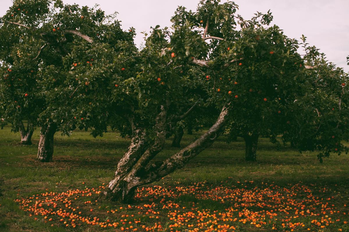 tasha tudor orchard-53