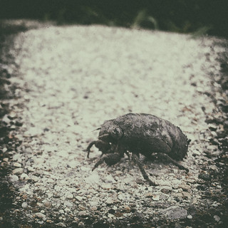 2019 - Day 225:  invasion of the insectiods