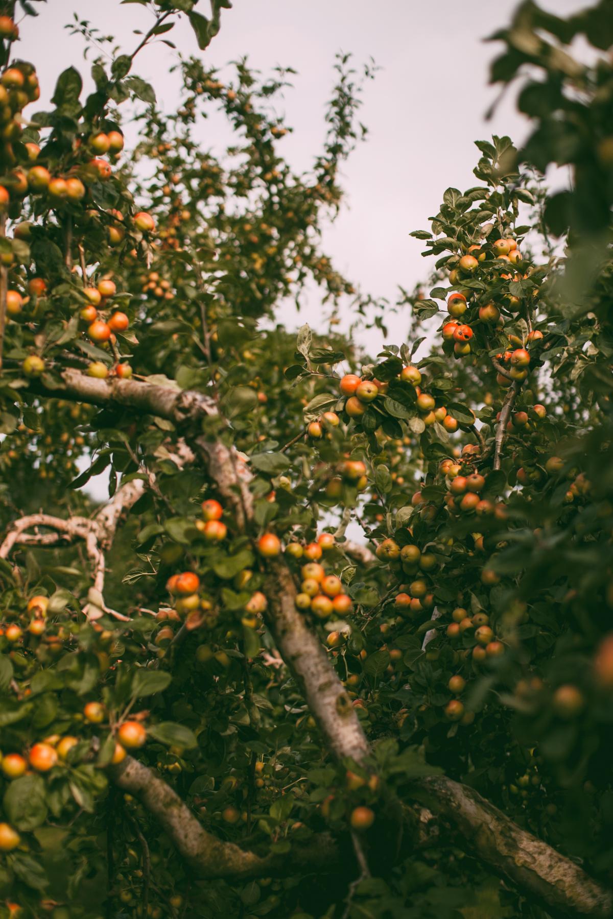 tasha tudor orchard-16