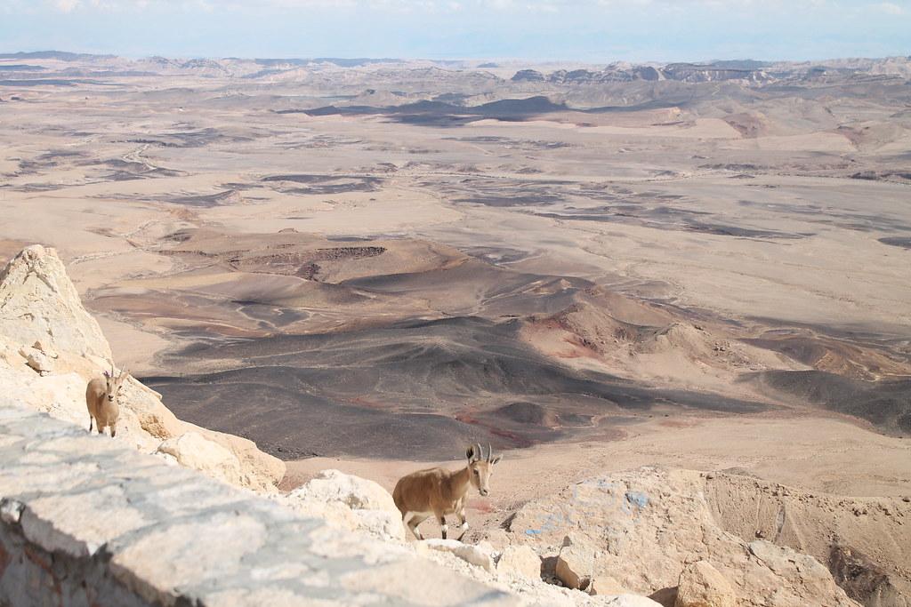 內蓋夫沙漠的拉蒙坑景觀
