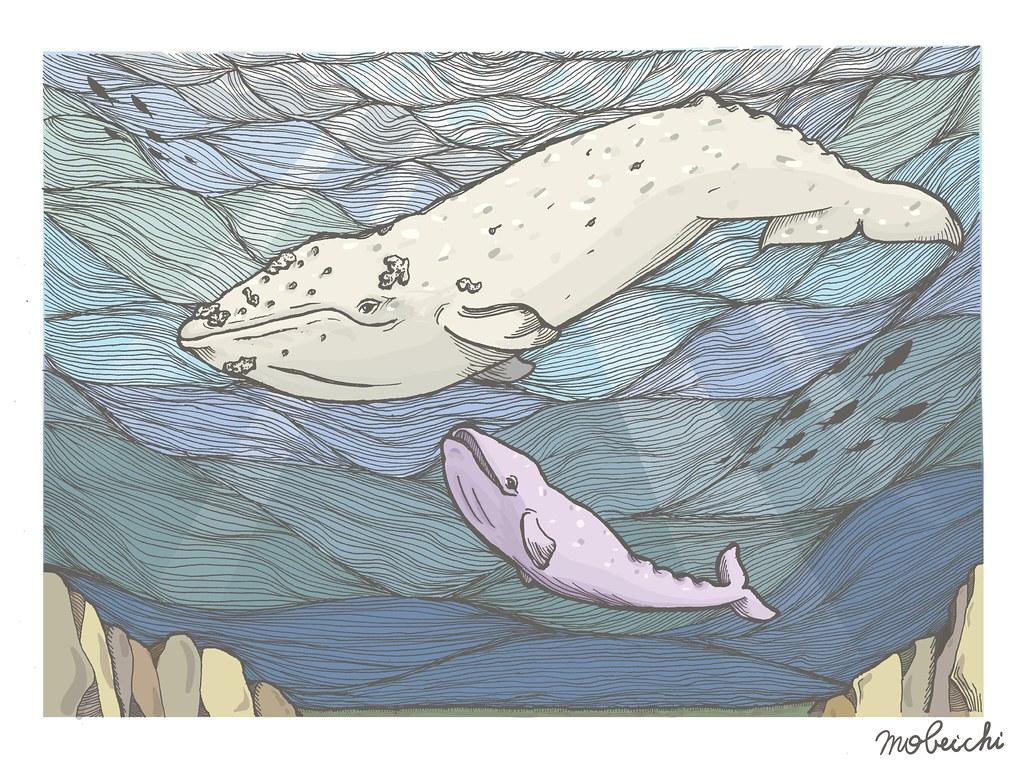 灰鯨母子對