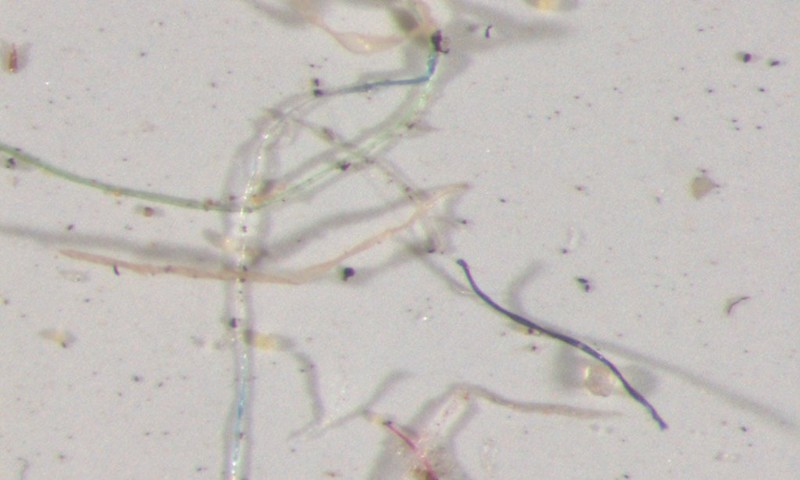美國落磯山脈、科羅拉多州雨水含塑膠微粒
