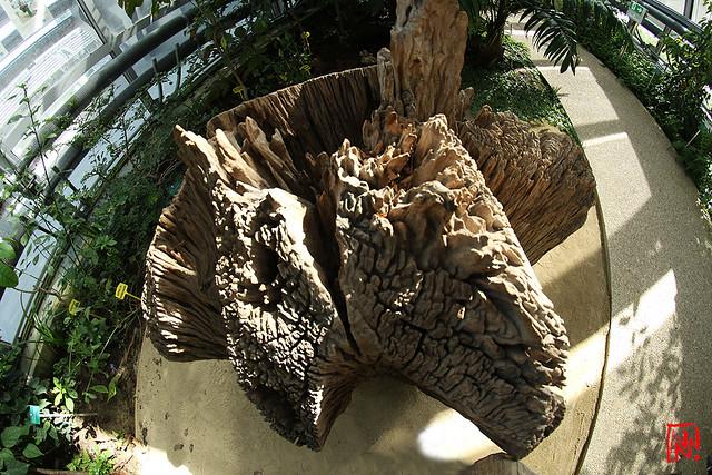 Un arbre à palabre en plein 16 ème arrondissement  !