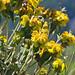 Flowers, Mikro Papigo, Greece