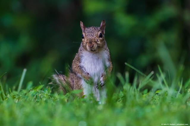 2019.07.09.4322 Squirrel!