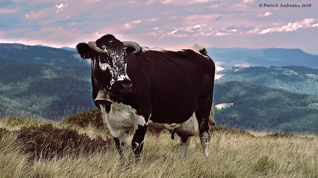 Une Vosgienne sur la vallée de Munster