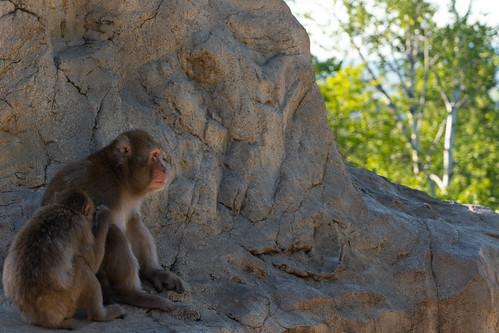 旭山動物園 Asahiyama Zoo