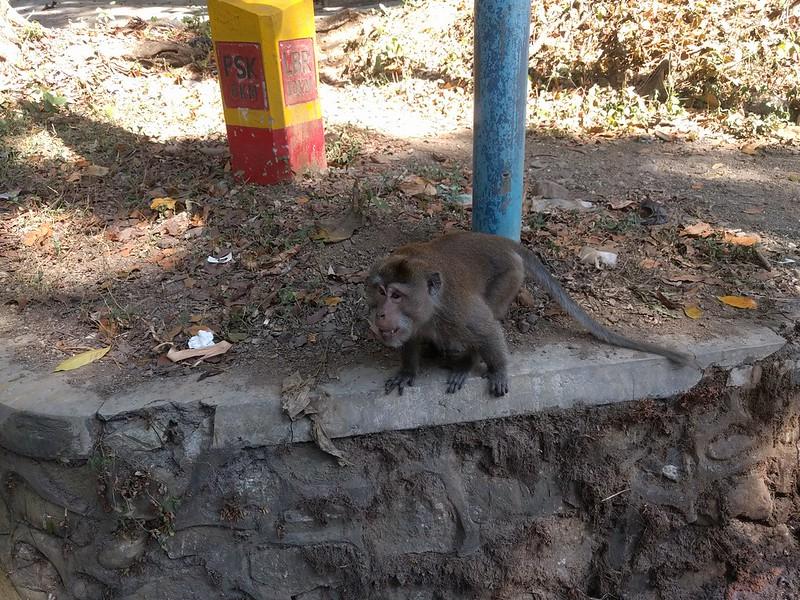 Monos en Lombok