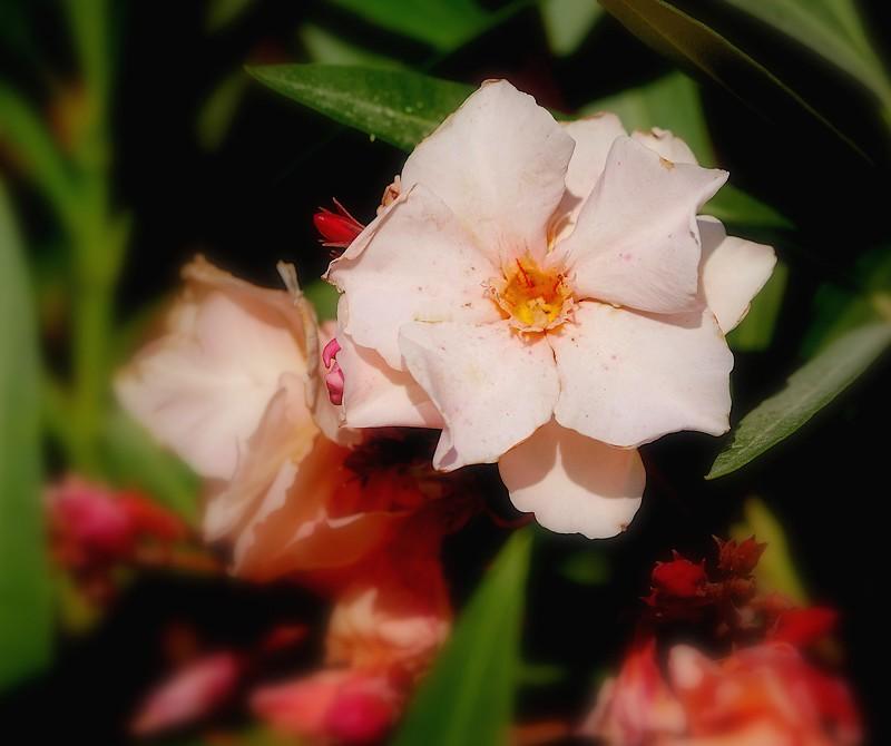 Au jardin des plantes. - Page 3 48542482096_fcd0fa678e_b