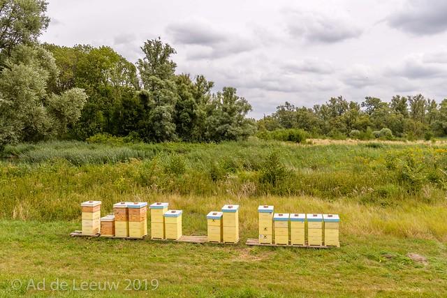 Bijenkasten ( Beehives ) in de Noordwaard