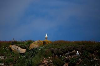 The Maritimes #26: More Birds!