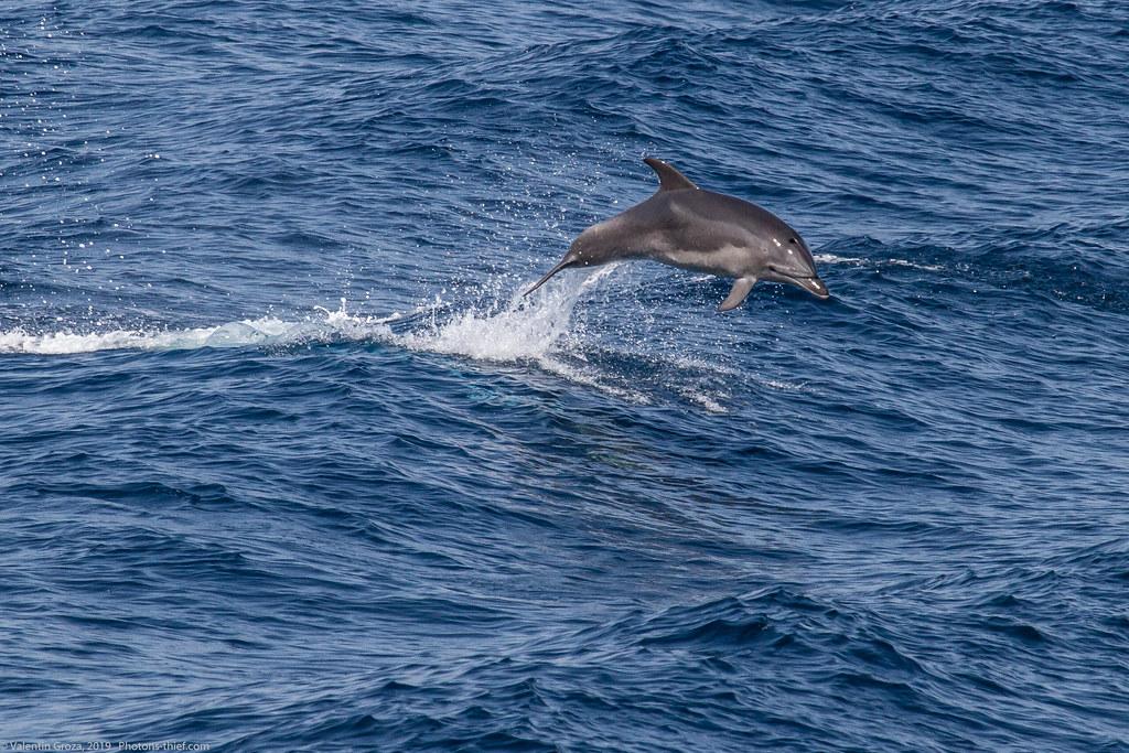 samothraki 2014_17_dolphin med