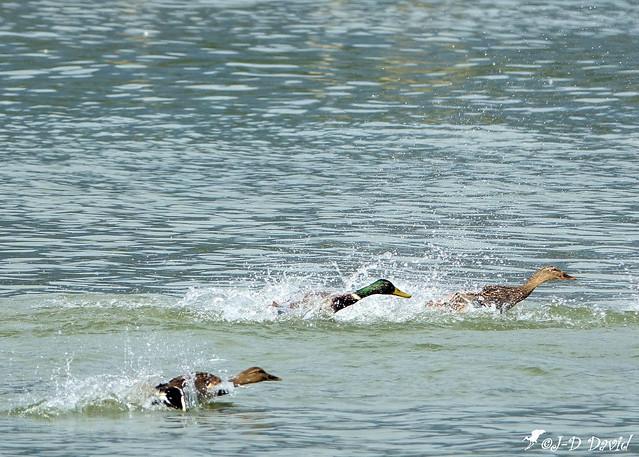 Grand prix du lac de Neuchâtel 😉