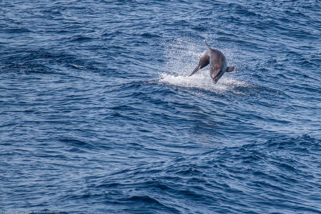 samothraki 2014_16_dolphin med