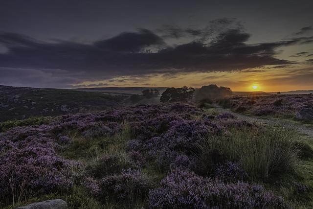 Sunrise over the heathers at Baslow Edge, Derbyshire, UK