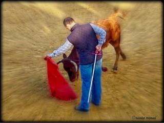 Mi mano izquierda #toreo #aficionadopractico #tentadero #campo #torosytorero #torero