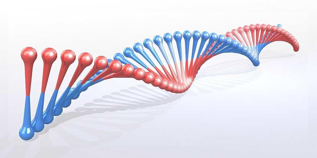Une nouvelle version de CRISPR modifie plusieurs gènes à la fois