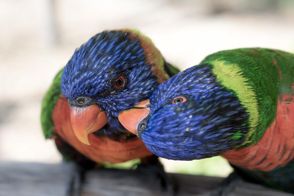 A little peck on the cheek
