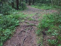 Roots - Hovskogen