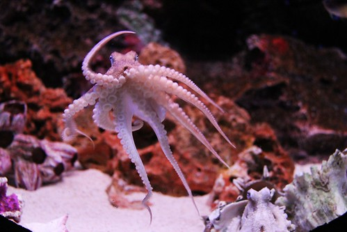 Sea Life Bangkok Ocean World. From 7 Beautiful Places To Visit In Bangkok