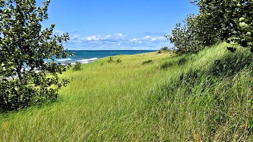 Dune grass at the Woollam Family Nature Preserve, Lake Michigan