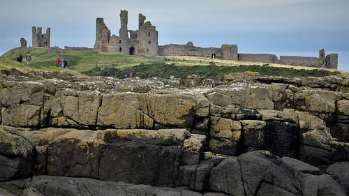 Walk along the cliff top edge at Dunstanburgh Castle Northumberland Walk 205