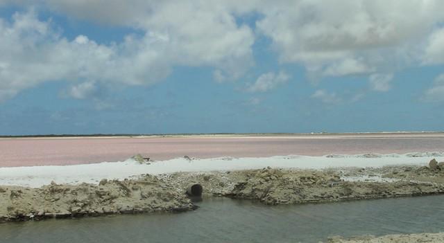 Bonaire - Salt Flats