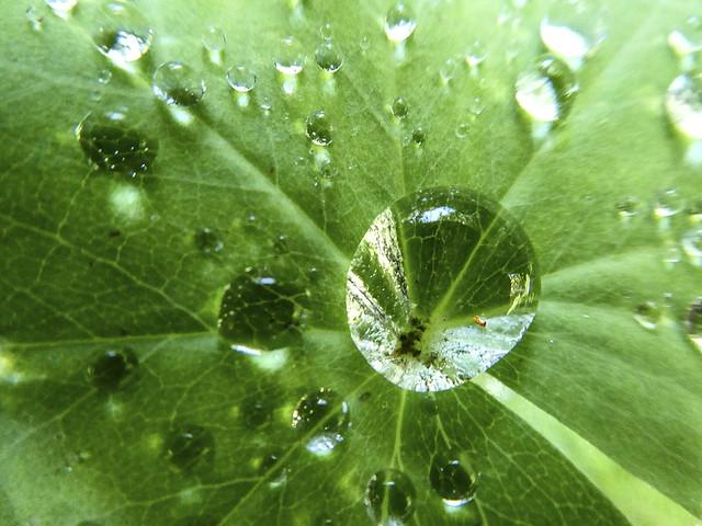 2019-08-14 A gem of a water drop!