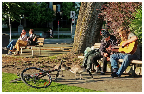 Playing for the Geese...
