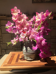 Homegrown Gladioli