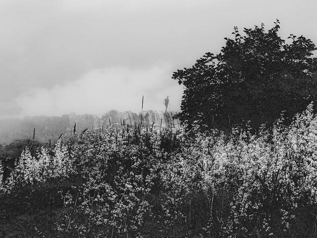 brouillard de vie