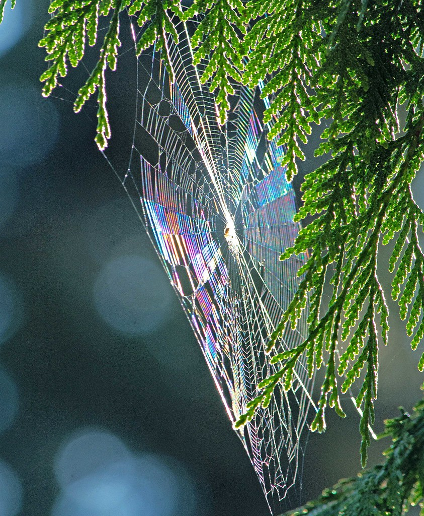 Each of us is a unique strand in the intricate web of life and here to make a difference ~~Deepak Chopra