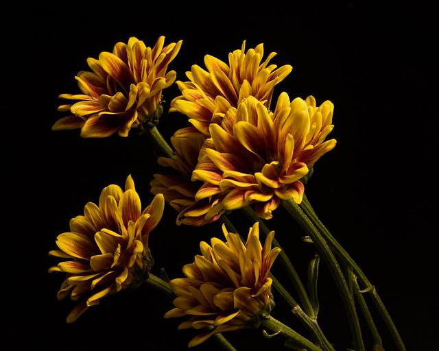 Floral Affection 1025