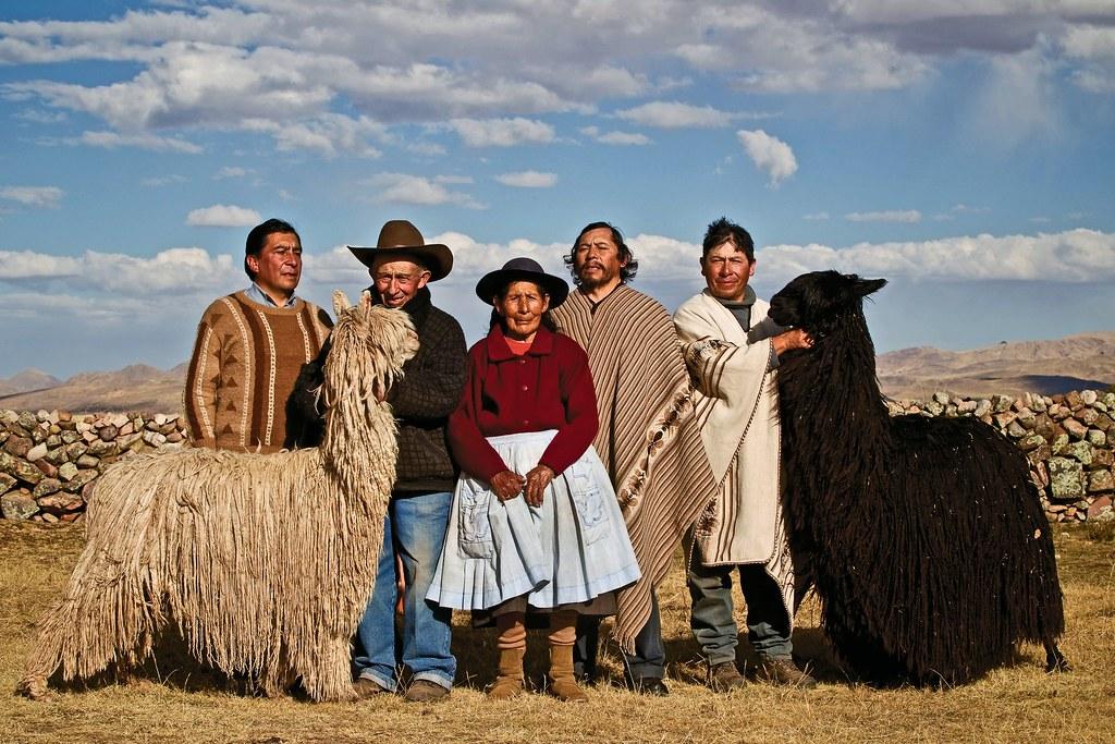 安地斯牧民和特有種蘇里羊駝。圖片來源:GEF Small Grant Program