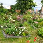 Summer at the Ashton Walled Garden