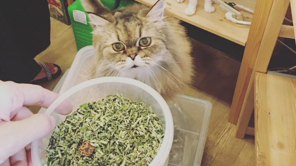 台中貓旅提倡自備容器,購買各式貓草、木天蓼等貓咪喜歡的產品。