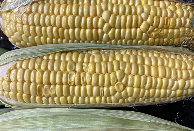 2019 Sydney: Corn